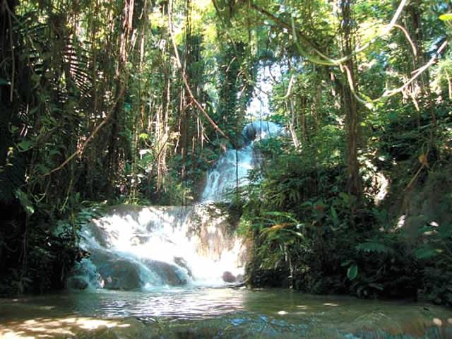 enchanted gardens jamaica tours 4 - Enchanted Garden