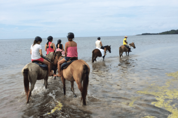 Heritage Beach Horse Ride Ocho Rios Rhodes Hall Plantation Negril Tour