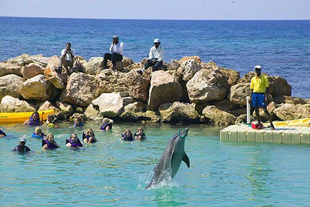 dolphin cove jamaica tours. Black Bedroom Furniture Sets. Home Design Ideas