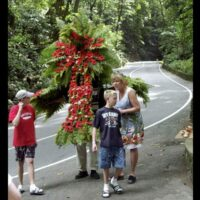 Located in Ocho Rios is the one of Jamaica's most beautiful natural wonders;The Fern Gully Eco Tour.Its is a scenic 3-miles stretch going through a rocky gorge filly with over 300 variety of ferns species such as Banana Trees and the Blue Mahoe.